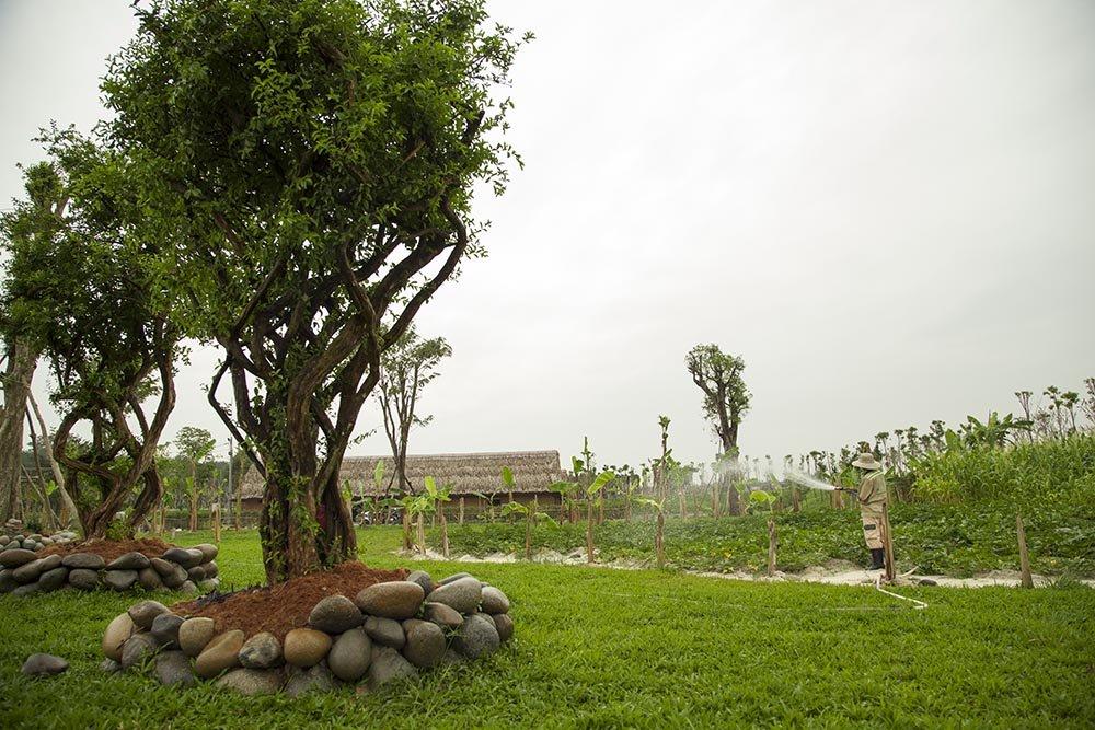 Cảnh quan với cây cối tại dự án Sala Garden